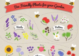 Bee Friendly Plants for your Garden crop