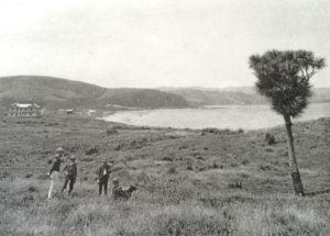 Tī kōuka (cabbage tree) approximate site of Te Rauparaha Reserve C1904 PATAKA Arts + Museum, Porirua Ref C-4-57