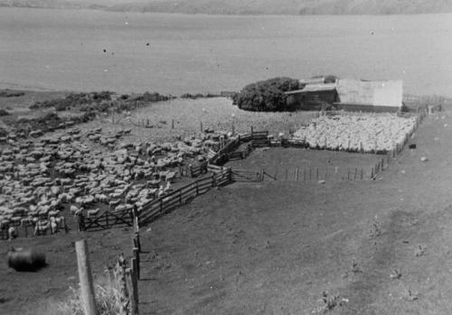 Mana Island woolshed. John Goult's Farm 1969.  Photo courtesy Pataka Art + Museum, Porirua ref Q1b8