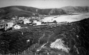 ooking down the south end of the Taua Tapu Track towards Steyne Avenue and Plimmerton Beach about 1904. Photo courtesy Pataka Art + Museum, Porirua (C_4_33)