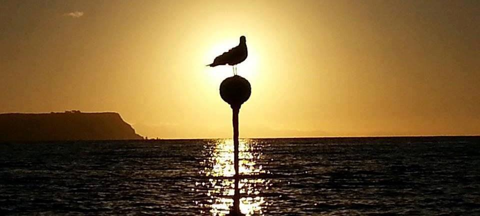 Navigation Ball with seagull at sunset. Photo courtesy Allan Dodson